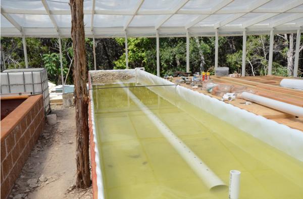 aquaponics plastic sheeting
