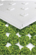 Lettuce in lettuce raft resized 600