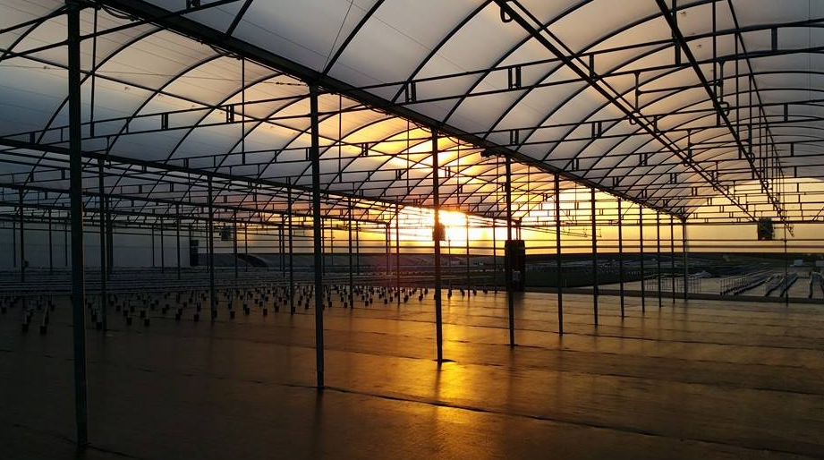 Greenhouse Plastic- greenhouse film, greenhouse poly film Solawrap