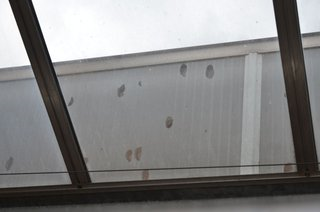 Greenroof damage to polycarb