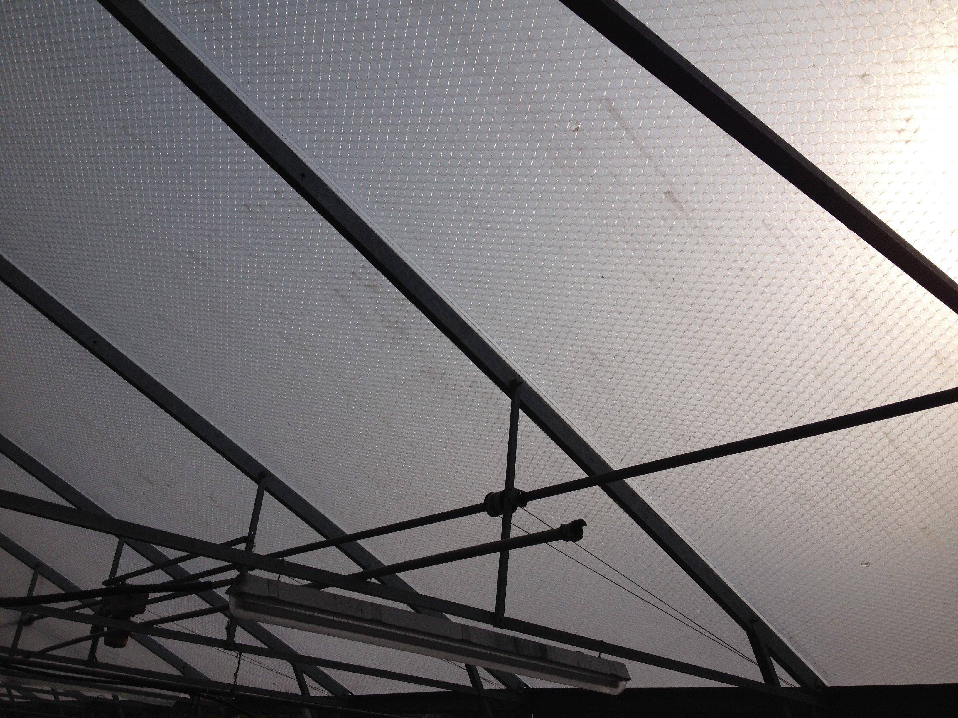 20 year old film on greenhouse.jpg