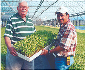 Lettuce Raft Hydroponic For Deep Water Culture
