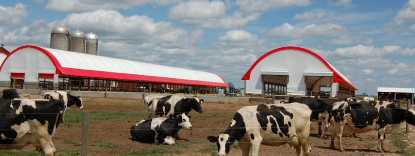 Fabric_structure_for_Dairy_Cattle_Barns.png
