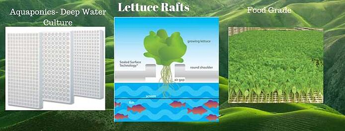 Lettuce rafts aquaponics Beaver Rafts
