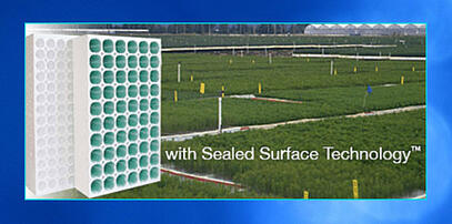 Lettuce Rafts  for deep water culture