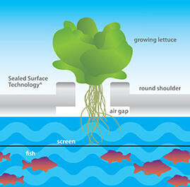 Lettuce rafts sealed surface technology