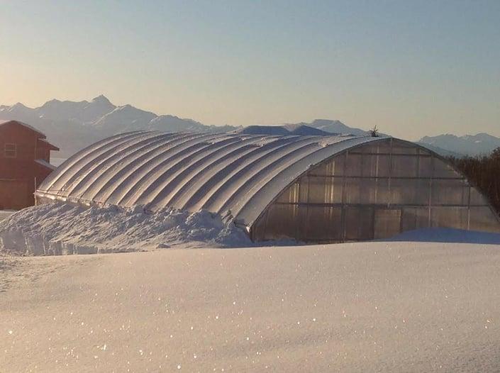 Sola In the Snow-1.jpg