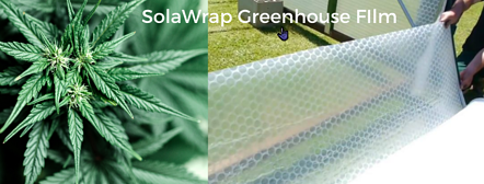 Cannabis in a SolaWrap Greenhouse