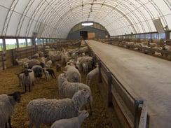 sheep barn farm building.jpg