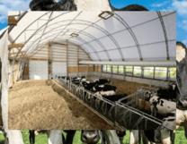 Cow barn fabric building
