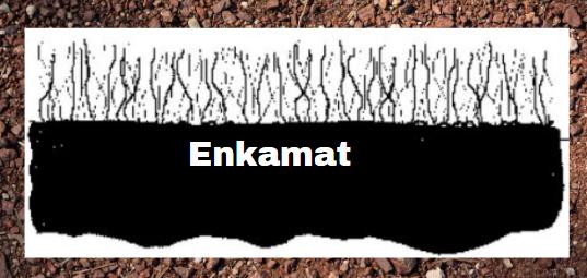 Enkamat vegetation cover